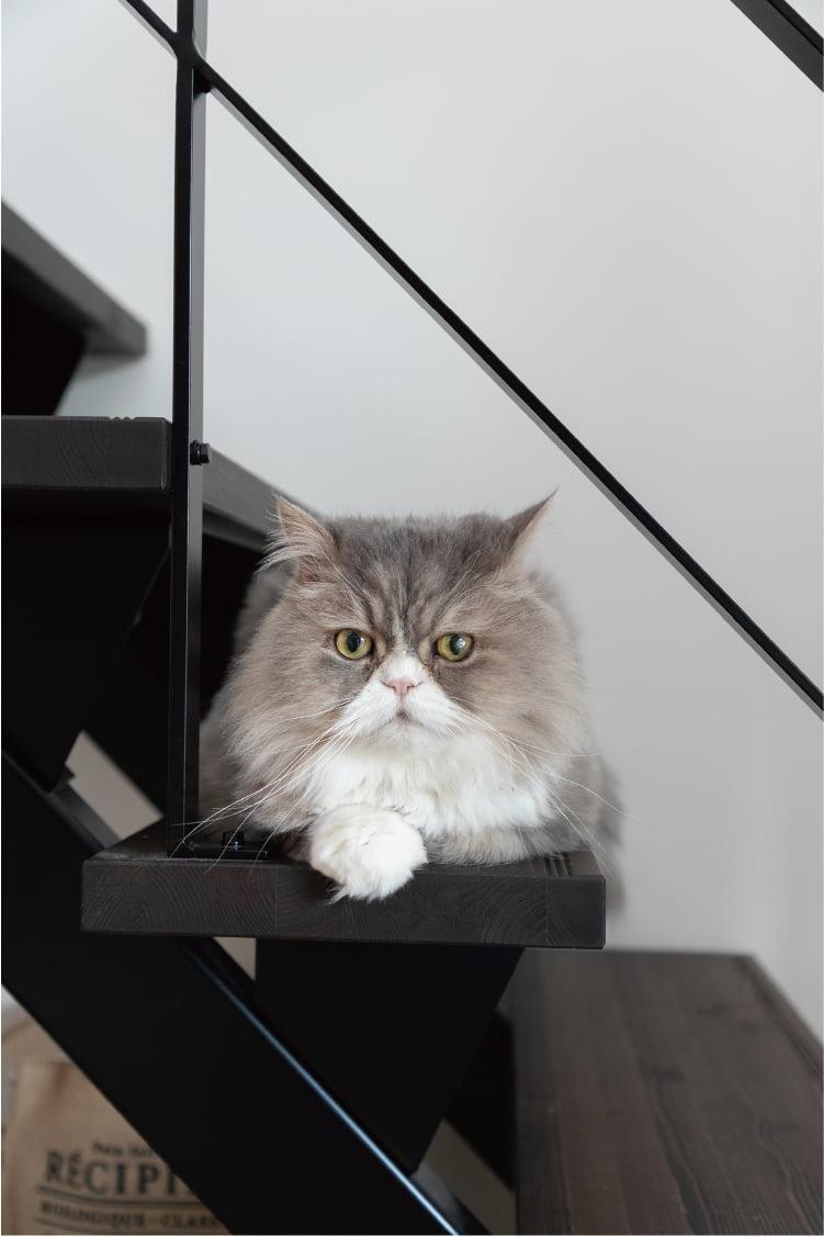愛猫サム君。取材にずっと立ち会ってくれました